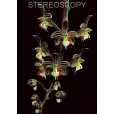 Stereoscopy # 115 (Issue 3.2018)