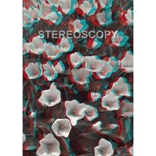 Stereoscopy # 81 (Issue 1.2010)